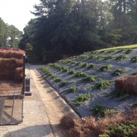 landscape-redesign-installation-fayetteville-5