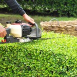 Landscaping Services, Landscape Maintenance